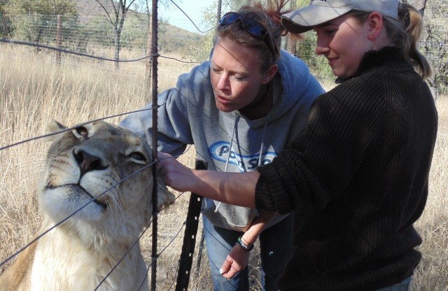 Bella, one of the Center's lions, Cara, director of Gitta-Martula, and Jen Tyrell. (Tyrell)