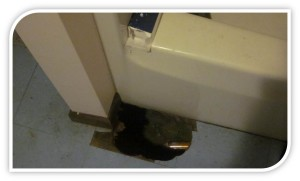 """One student living in a Frostburg rental property had to live with a hole in the bathroom floor. Powell said you could see down to the basement through the hole. (Photo credit: Students in Powell's 2012 research project called """"Photovoice,"""" coordinated as part of her study of neighborhood relations in the campus-adjacent neighborhood in Frostburg."""