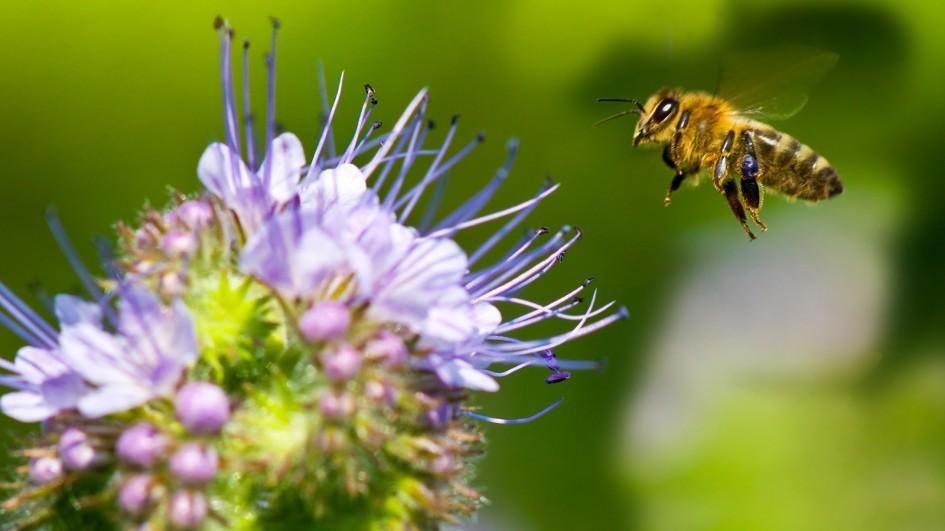 What's Going on with Honeybees – The Bottom Line News - photo#47