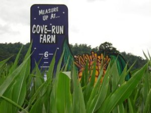 Cove Run Farm's Corn Maze.