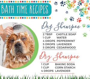 An essential oil shampoo recipe for dogs.